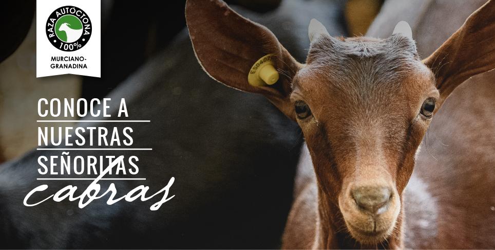 nuestras_cabras